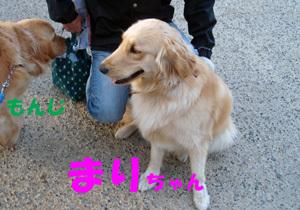 Dog11032702
