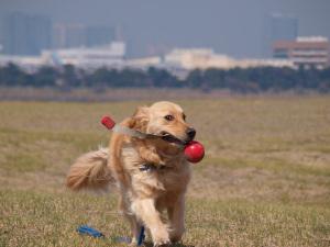 Dog11033104