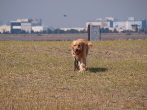 Dog11033105