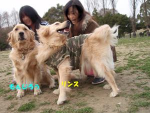 Dog11040301