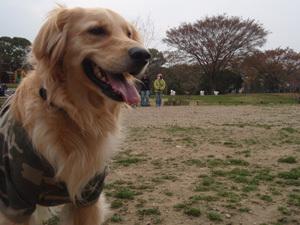 Dog11040303