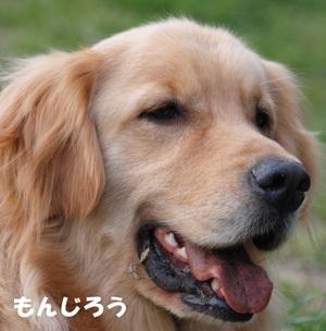 Kyoudai03
