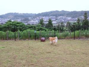 Kansai022