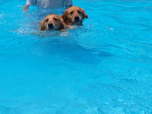 Pool012