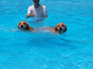 Pool013