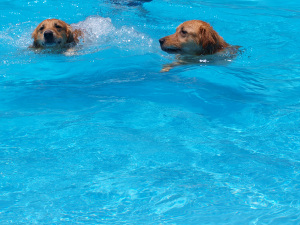 Pool014