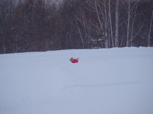 Snow75