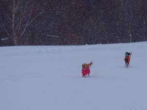 Snow77