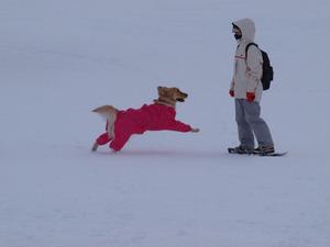 Snow78