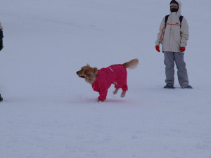 Snow79