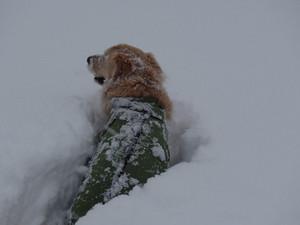 Snow0042_2