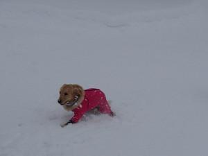 Snow0063