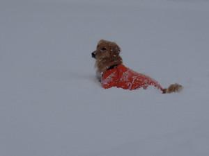 Snow0071