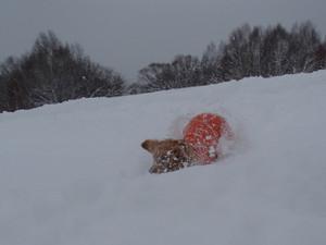 Snow0075