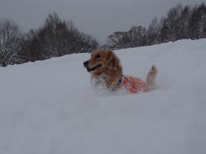 Snow0076