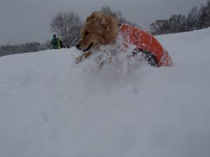 Snow0077