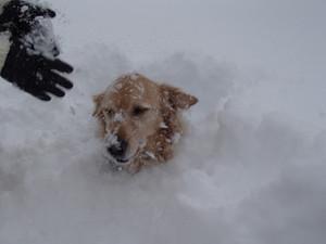 Snow0082