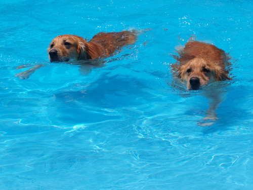 Pool017