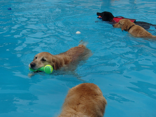 Pool104