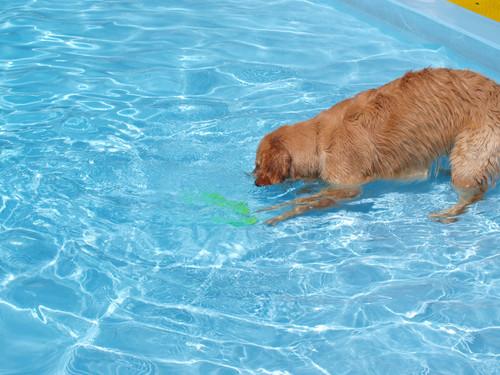 Pool135