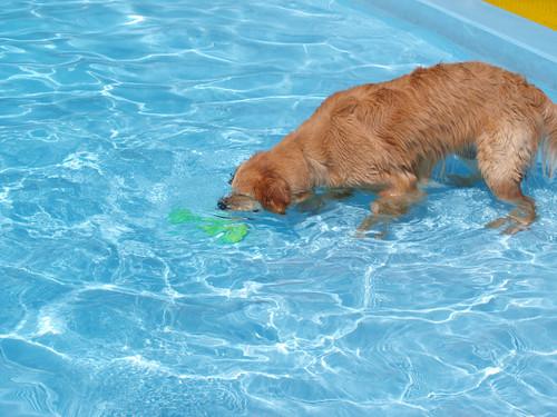 Pool136